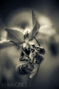 Plan Bee 1